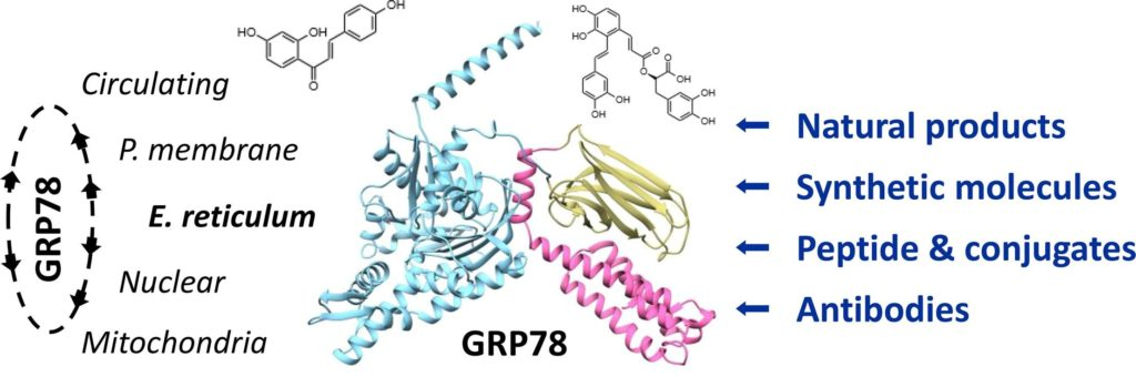 Bailly C & Waring MJ. Pharmacological effectors of GRP78 chaperone in cancers. Biochem Pharmacol. 2019, 163:269-278.